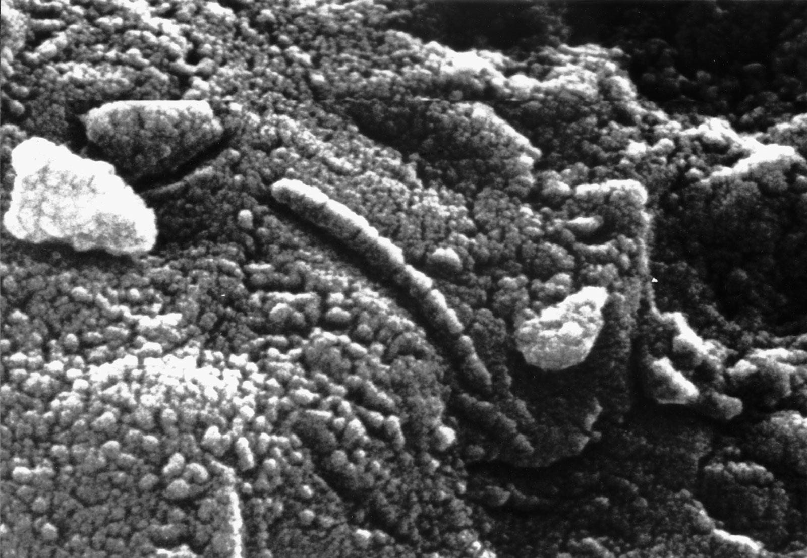 ALH84001, presunti fossili di batteri