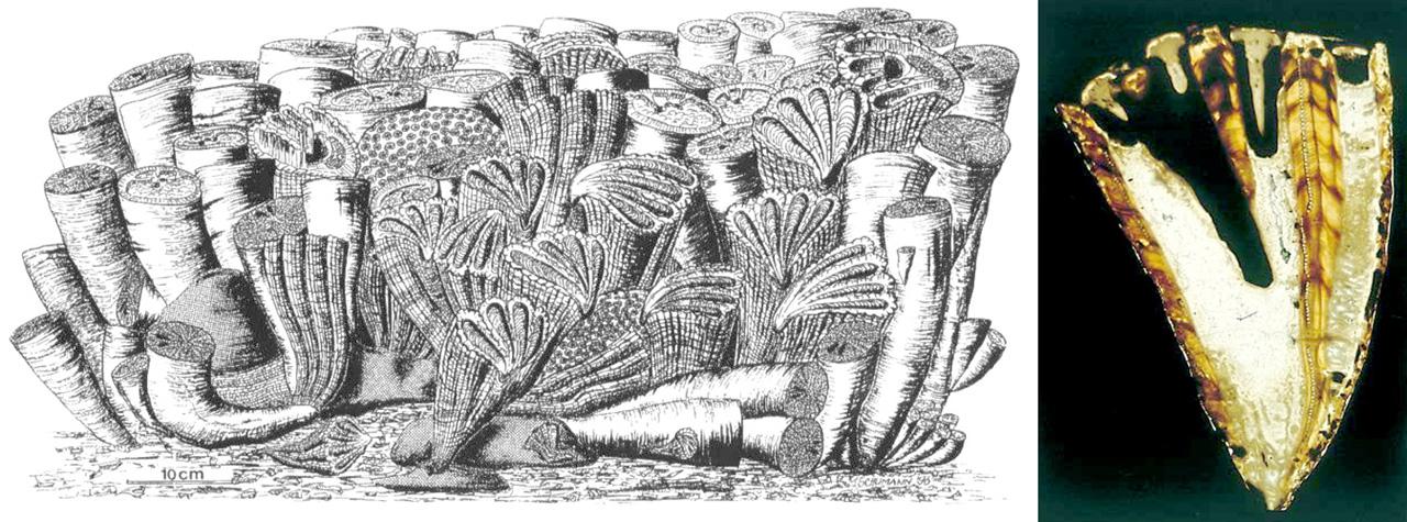 Ricostruzione di una scogliera a rudiste del tardo Cretacico